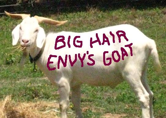 GoatBigHairEnvy