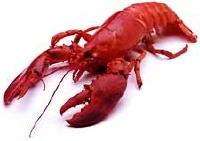 Lobster89%