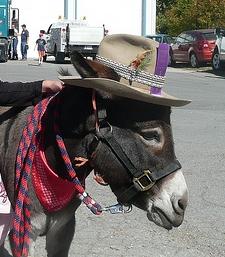 DonkeyHat