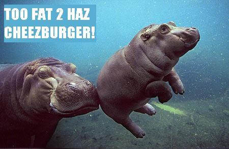 TooFat2HazCheezburger