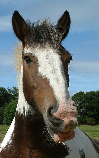 374px-Horse_close