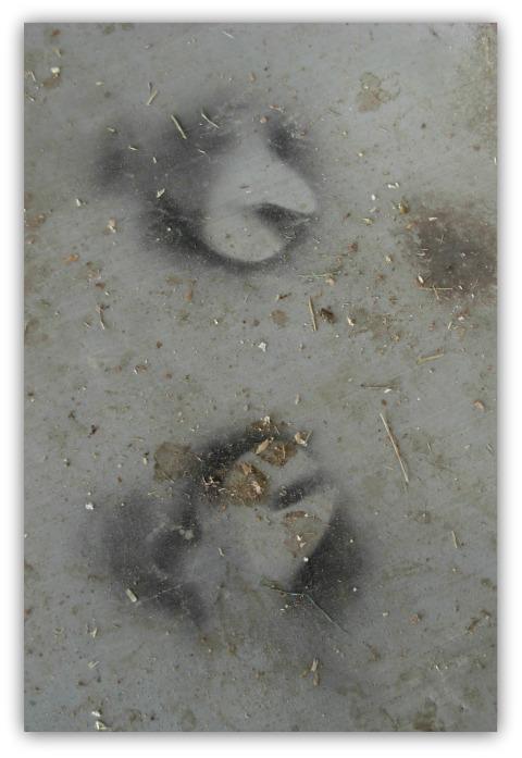 Hoofprints480