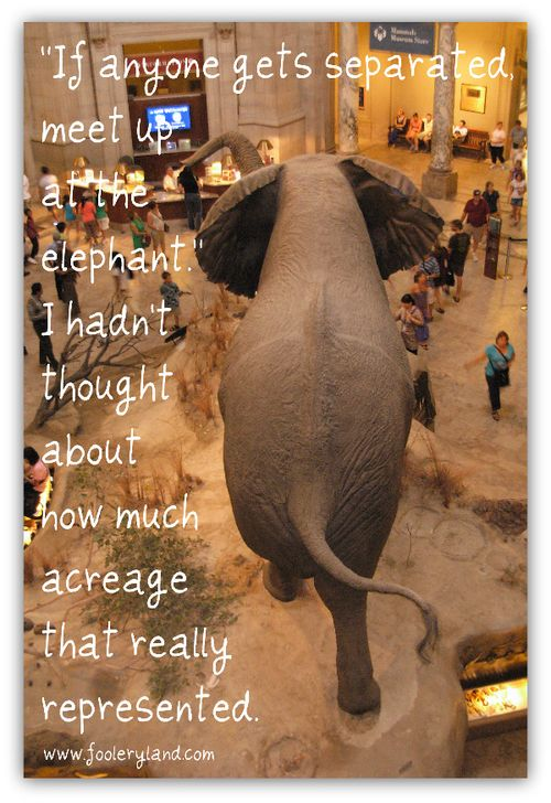 ElephantAcreage263_600