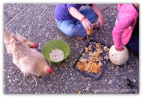 HensPumpkinSeeds2347