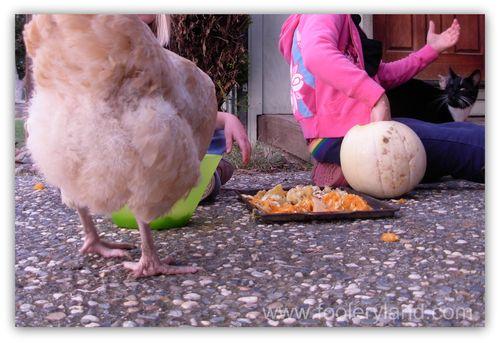 ChickenButt2343