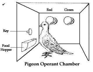 Pigeonbfskinner320