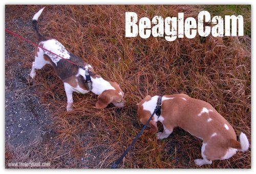 BeagleCam
