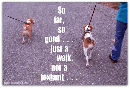 DogsFoxhunt