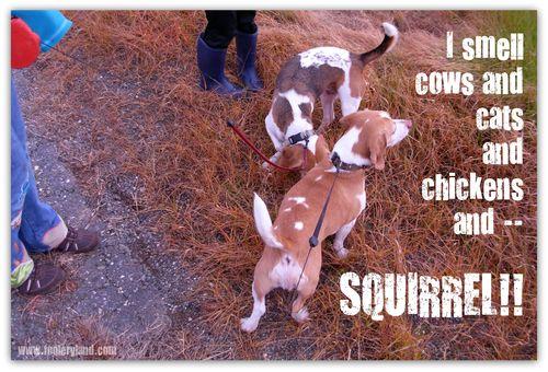 DogsSquirrel