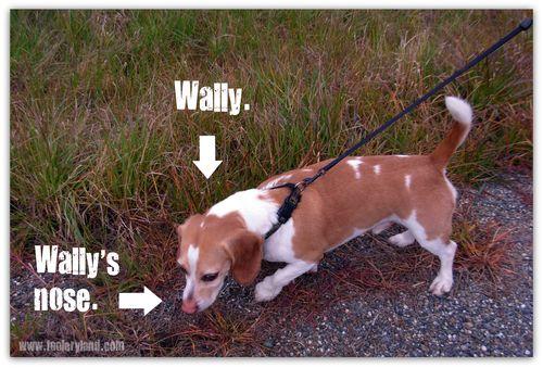 Wally'sNose