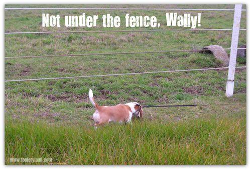 WallyFence
