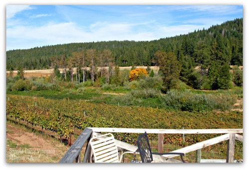 Vineyard10-15-11_800