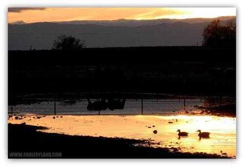 Ducks1_1200