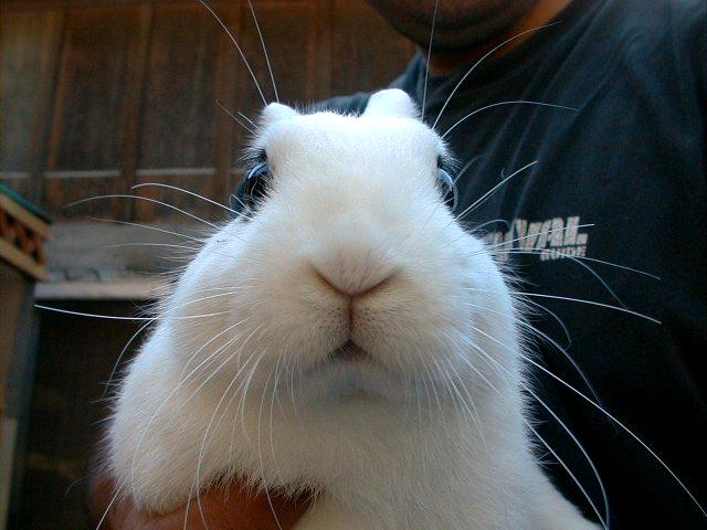 Rabbit_face