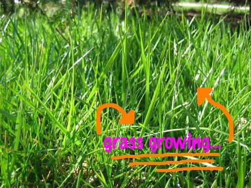 Grassgrowing