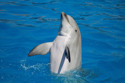 Dolphinstanding_2
