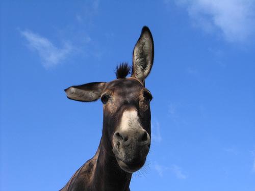 Donkeyears
