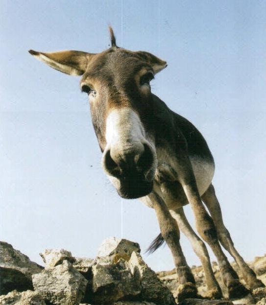 Donkeyfacecropped