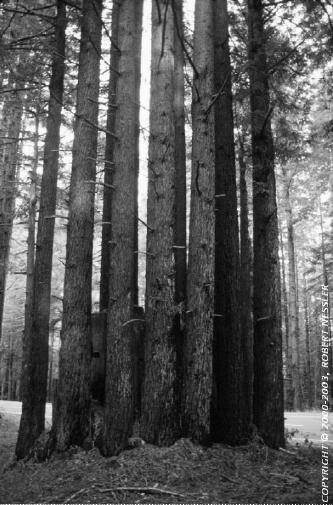 Redwoodgrovebw