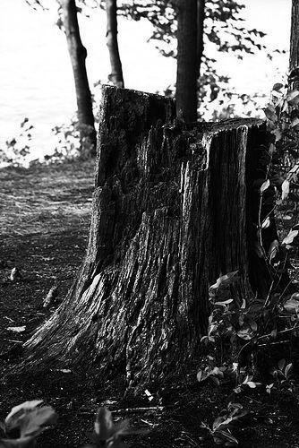 Treestumpbw
