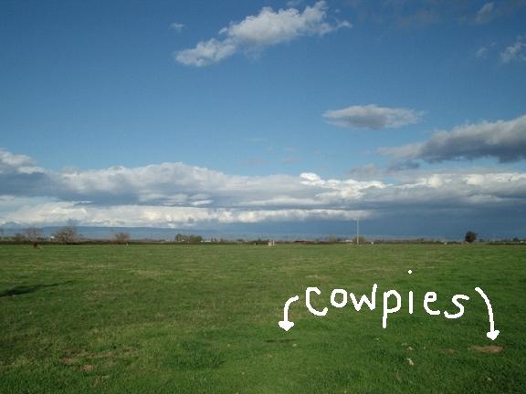 Cowpies1