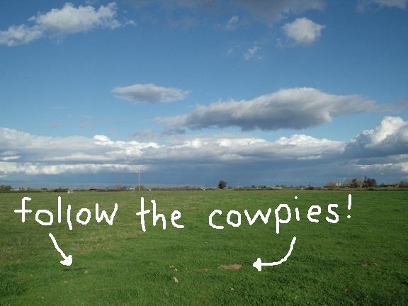 Cowpies2