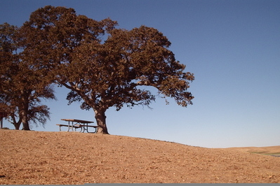 Lonelytree